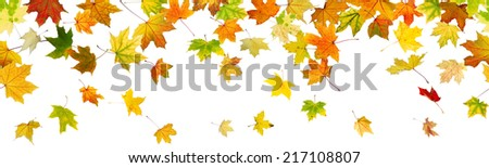Panoramic seamless pattern of autumn maple leaves falling down on white background. - stock photo