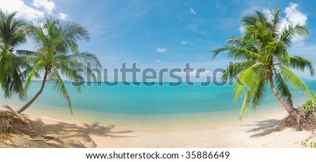 panoramic tropical beach with coconut palm - stock photo