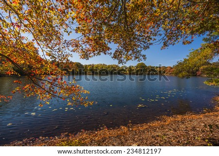 Panoramic view of a forest with its exuberant fall foliage on a super sunny day., - stock photo