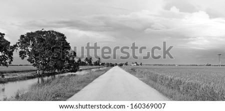Panoramic view of a long straight rural road through a rural tropical rice field in Sekinchan, Malaysia.  - stock photo