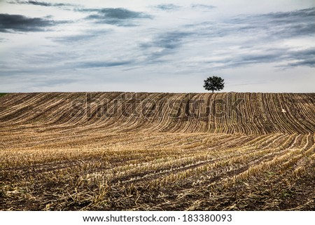 Panoramic view of autumn landscape with lonely tree and dramatic clouds in the background, Bavaria, Germany - stock photo