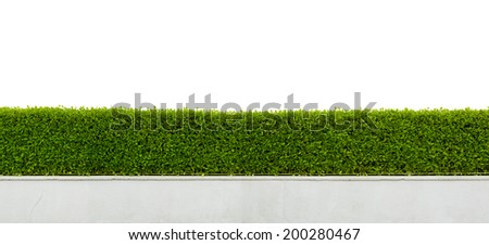 Panoramic view of beautiful hedge fence isolated on white background - stock photo