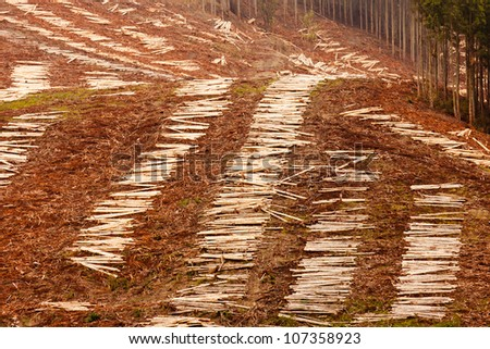 Panoramic view of deforested hillside by clearcutting mature Eucalyptus forest for timber harvesttimber - stock photo
