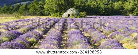 Panoramic view of Lavender field near Banon, France - stock photo