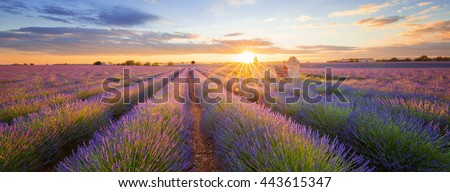 Panoramic view of lavender filed in Valensole. Provence, France - stock photo