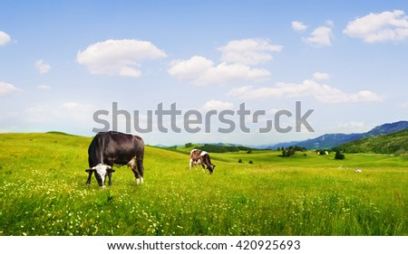 panoramic view of nice green hill with sows on blue sky background - stock photo