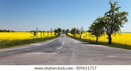 Panoramic view of rapeseed (brassica napus) field and road - stock photo