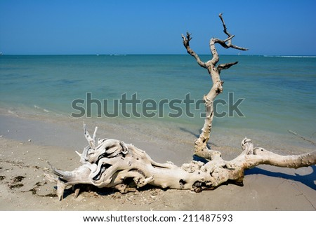 Panoramic view of the blue sea and blue sky in the background with skeleton of a dead tree on the beach in the foreground. - stock photo