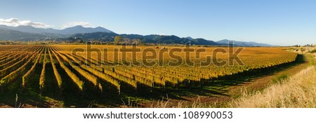 Panoramic view of the vineyards in the Marlborough district of New Zealand's South Island - stock photo