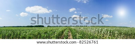 Panoramic view of young apple orchard and blue sky. - stock photo