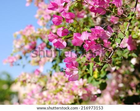 Paper flowers - stock photo
