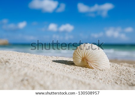 paper nautilus shell  with ocean , beach and seascape, shallow dof - stock photo