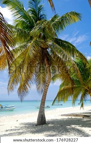 Paradise beach at Saona Island, Dominican Republic - stock photo