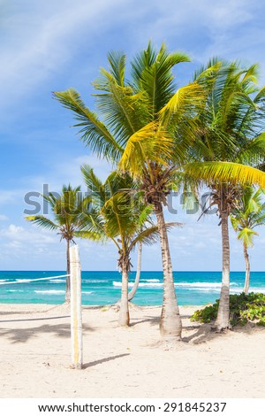 Paradise beach volleyball white sand court with palms and  - stock photo