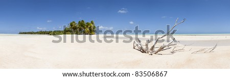 Paradise white sand beach and palm tree of a tropical island panoramic view - stock photo