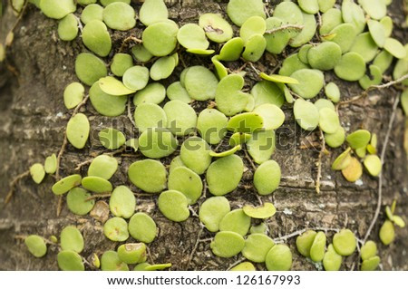 Parasite plant at the Coconut Tree - stock photo