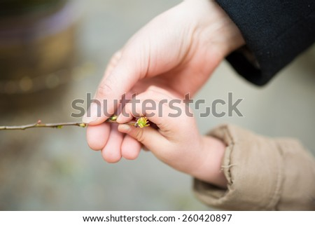 Parent-child hands touch the sprout - stock photo