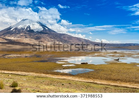 Parinacota volcano and Chungara lake, Lauca National Park (Chile)  - stock photo