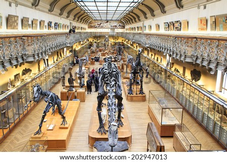 PARIS, FRANCE - MARCH 17 : Skeletons of dinosours in the National Museum of Natural History on March 17th, 2014 in Paris, France - stock photo