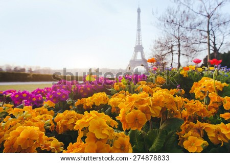 Paris in spring, yellow flowers in foreground and Eiffel tower blurred on background - stock photo