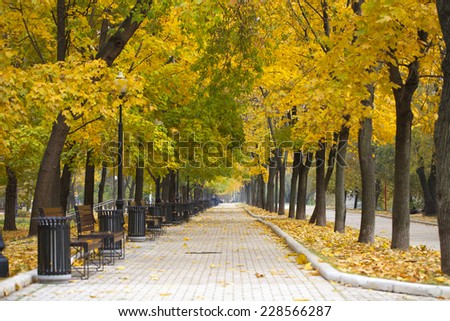 Park alley in yellow autumn - stock photo
