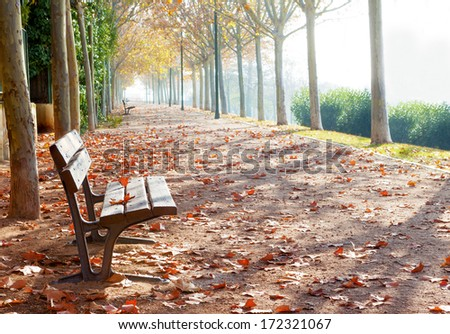 Park bench on autumn in orange toned - stock photo
