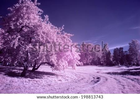 Park in magenta tones (infrared photo) - stock photo