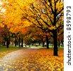 Park in November - stock photo