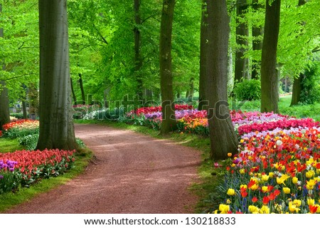 Park in The Spring.Tulips. Spring landscape. - stock photo