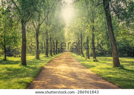 Park landscape with a long alley - stock photo