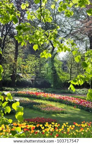 Park on a sunny day. Tulips. - stock photo