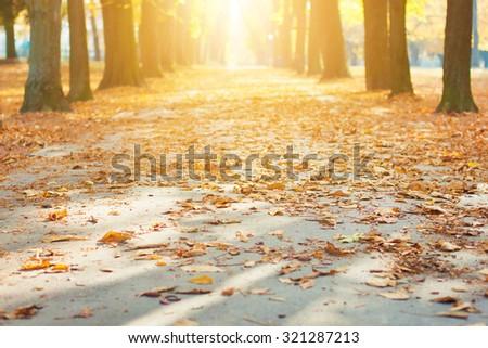 Park path in autumn sun - stock photo