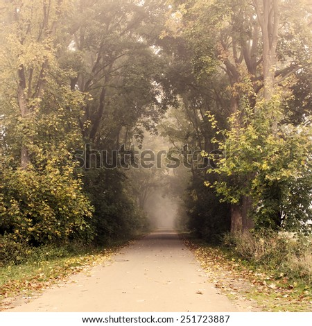park road with fog in autumn - stock photo