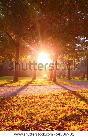 Park Scene Leaves - stock photo
