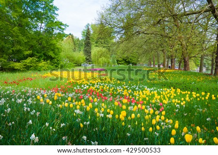 Park with trees, colorful tulips and other flowers - stock photo