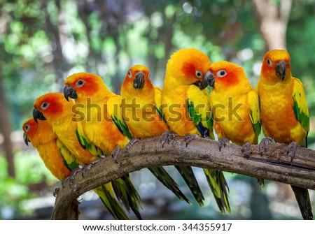 parrot - stock photo