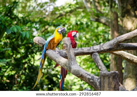 Parrot bird sitting on the branch - stock photo