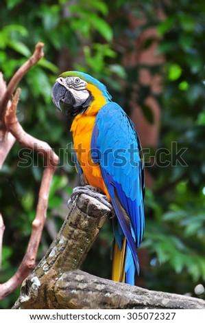Parrot bird sitting on the perch - stock photo