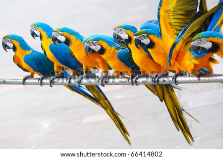 Parrot birds standing in a row - stock photo