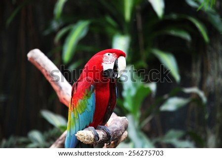 Parrot hanging out - stock photo