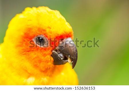 parrot in nightsafari chiangmai Thailand - stock photo