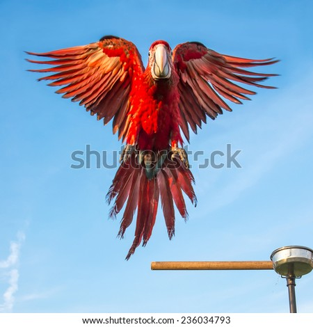Parrot macaw was flying to catch perch with a backdrop of the sky. - stock photo