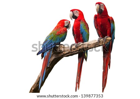 parrot on white background. - stock photo