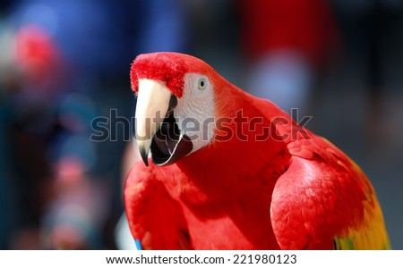 Parrot - Red Blue Macaw Speaking - stock photo