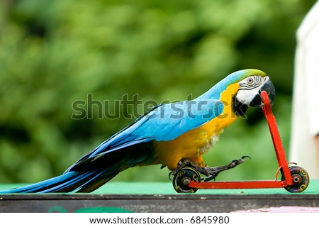 Parrot riding on a bicycle. - stock photo