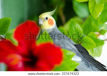 Parrot with red cheeks in green leaves  - stock photo