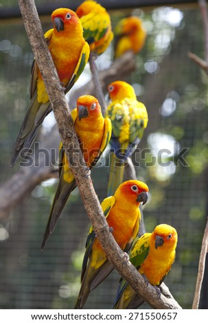 Parrot Yellow perch on the branches. - stock photo
