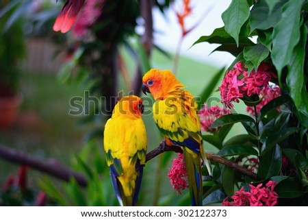 Parrots - stock photo