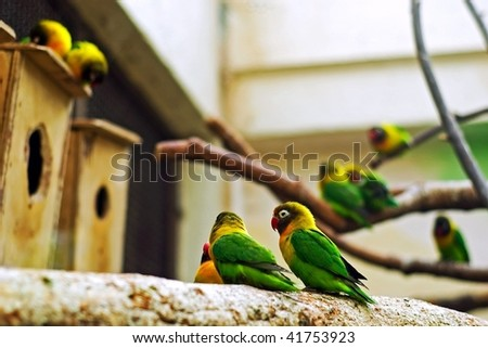 parrots in zoo - stock photo