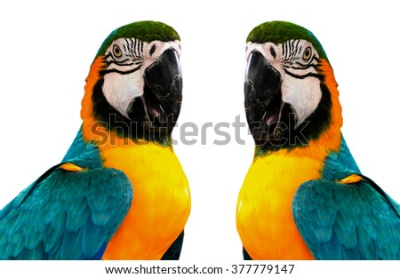 parrots isolated on white background ,Parrots Court ,Colorful parrot ,beautiful parrots,parrots looking,parrots sitting,animals,big parrots  - stock photo